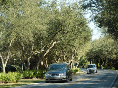 Vehicles travel through a canopy of trees along Scenic Highway 30A. | Photo by: Andrew Wardlow