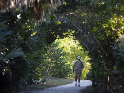 John Ginaven, of Longboat Key, visits Leffis Key daily to look for wildlife, including herons and white pelicans. The key is an island preserve with trails and plenty of wildlife and bird viewing. (Bradenton Beach Scenic Highway on Anna Maria Island is a waterfront highway corridor that offers nature, scenery, and pedestrian and bike-friendly paths. At 2.8 miles long, it offers panoramic views of the Gulf of Mexico and Sarasota Bay along Highway 789. It also includes access to Leffis Key, an island preserve with trails and plenty of wildlife and bird viewing.) (Bradenton Beach Scenic Highway) Photo made on 11/30/15 Photo by Lara Cerri