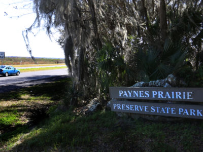 Cars travel along the Old Florida Heritage Highway through Paynes Prairie Preserve State Park just south of Gainesville, Fla.