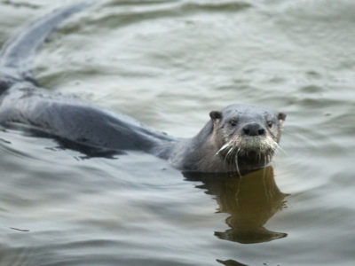 Otter | Photo by: Tom Burton