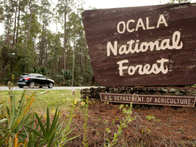 The Ocala National Forest is home to the majority of the Florida Black Bear Scenic Byway. Photographed on Janaury 5, 2015. Photo by Tom Burton