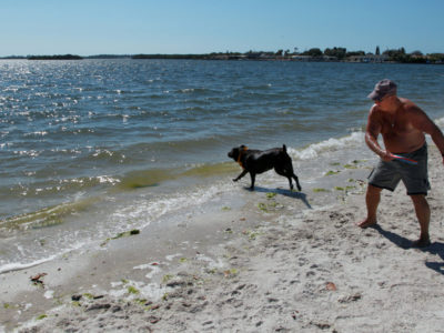 Bradenton Florida. 2/22/2016. Jim Resnik who along with his wife Hollis were enjoying the Palma Sola Scenic Highway beaches. Here he throws a disc for Brandy to fetch. They are from Troy, New York. On the ground photos of the Palma Sola Scenic Highway and areas along it. Photo by Bill Serne