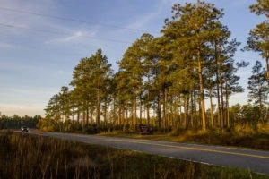 Much of the Forest Trail loop of the Big Bend Scenic Byway winds through the Apalachicola National Forest. This is CR 375 near Fla. Highway 20. COLIN HACKLEY PHOTO