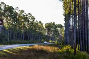 This section of the Big Bend Scenic Byway winds along the Ochlockonee River in the Apalachicola National Forest. This is CR 375 south of Fla. 20. COLIN HACKLEY PHOTO