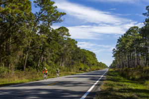 Bicyclists ride the Coastal Trail portion of the Big Bend Scenic Byway east of the intersection of U.S. Highways 319 and 98 and near St. Teresa. COLIN HACKLEY PHOTO
