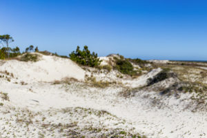 A panoramic view of pines, dunes and the Gulf of Mexico as a bicyclist rides the Big Bend Scenic Byway in St. George Island State Park. COLIN HACKLEY PHOTO EDITOR'S NOTE: This image is comprised of multiple photos taken at the same moment and stitched together by Photoshop to create a panorama.