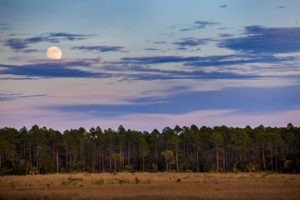 A full moon rises over Doyle Creek on Fla. Highway 65 north of Eastpoint on the Forest Trail West section of the Big Bend Scenic Byway. COLIN HACKLEY PHOTO