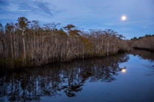 Cypress trees are reflected in Graham Creek as a full moon rises over the Forest Trail West section of the Big Bend Scenic Byway on Fla. Highway 65. COLIN HACKLEY PHOTO