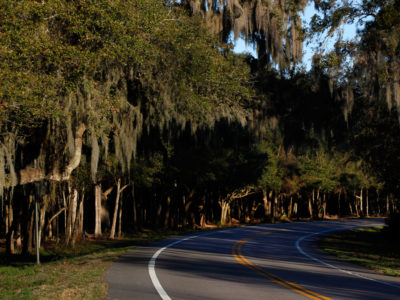 Live oak canopies cover much of the 17-mile William Bartram Scenic and Historic Highway, in western St. Johns County, as seen in Riverdale. Daron Dean for VISIT FLORIDA