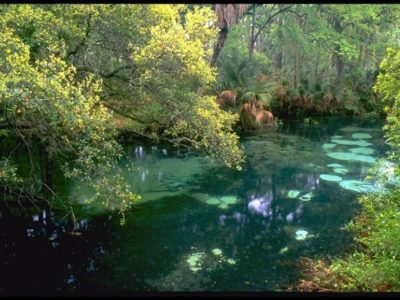 Juniper Springs Pool