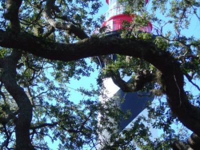 Lighthouse Trees