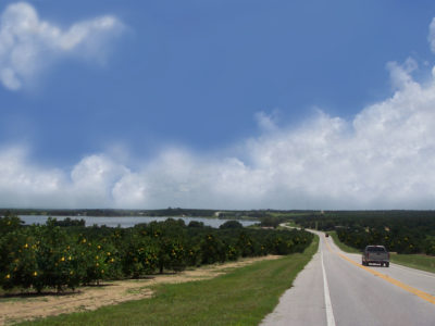 Orange Grove Along Road