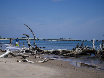Giant Driftwood Along The Byway