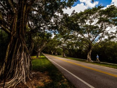 Bridge Road Banyan Hobe Sound