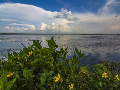 Lake Apopka Flowers